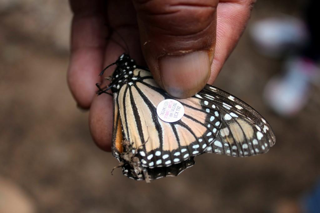 Monarch trips